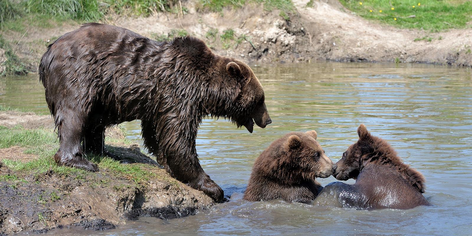 Beren Dier en Park