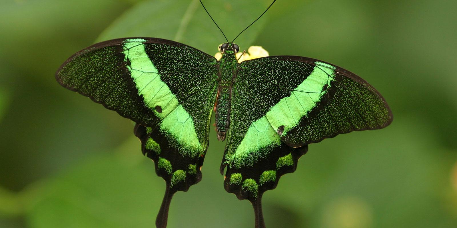 Vlinder Dier en Park