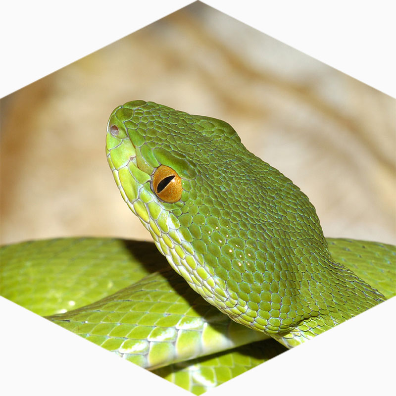 Reptielenzoo Serpo