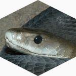 ReHerp bij Reptielenzoo Serpo